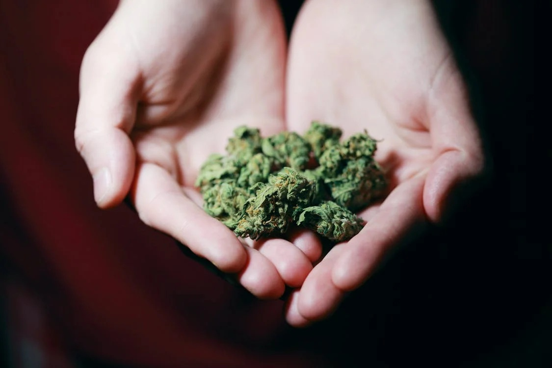 image of Cannabis Marijuana with Coconut